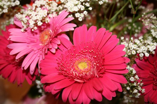Gerbera daisies are a favorite for casual weddings.