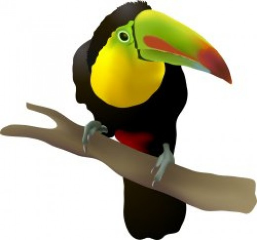 Oops! I thought I heard toucan.