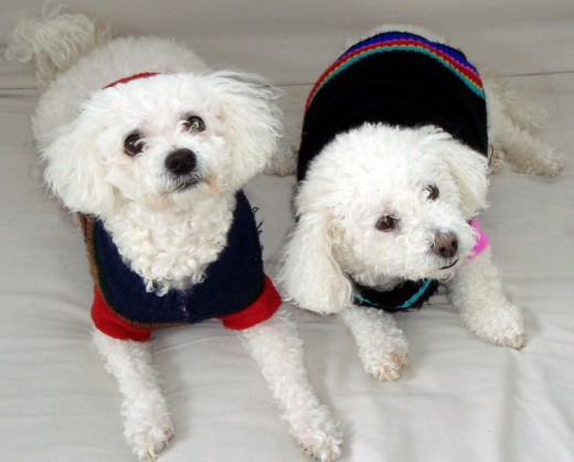 I was able to enhance and correct the lighting with Picasa. In this photo is my friend, Nari's dogs-Mickey and Minnie.
