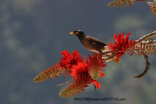 Humming Bird on red flower. source azfotos