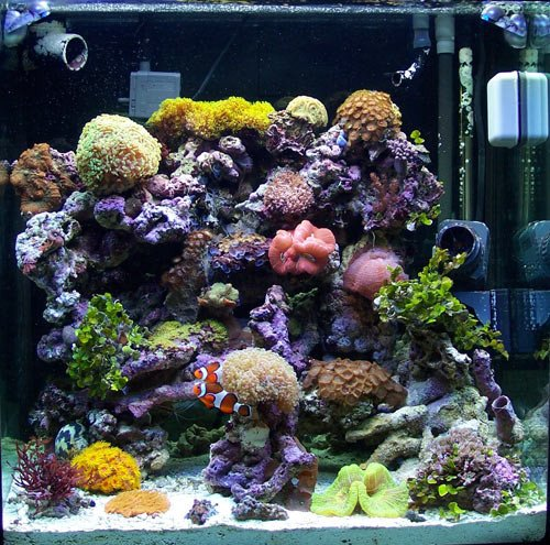 an aquarium should be relaxing right hubpages. Black Bedroom Furniture Sets. Home Design Ideas