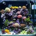 An aquarium should be relaxing...right?