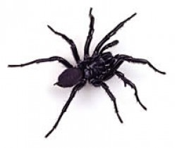 Australia's Worst and Deadliest Spiders and Treatment