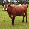 WildRoseBeef profile image