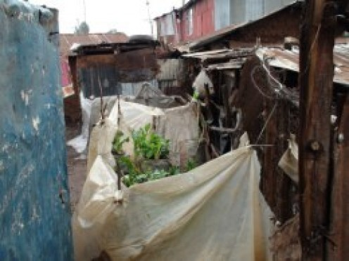 View of an alleyway in the slum showing the sack gardens many women now grow.