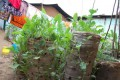 The Sack Gardens of the Kibera Slum
