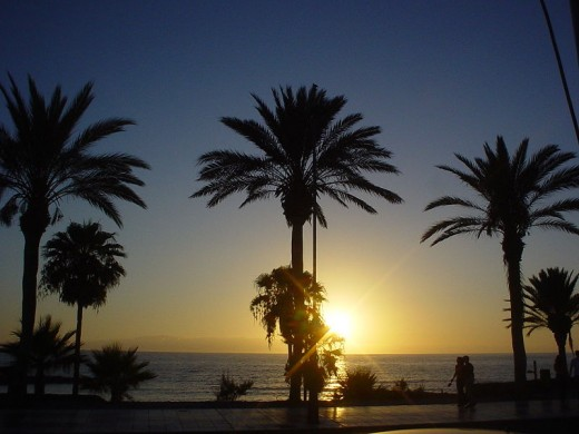 Sunset and palms on Tenerife