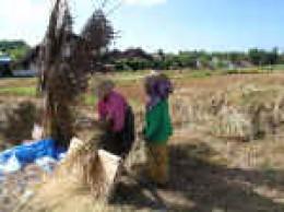 Bali farmers