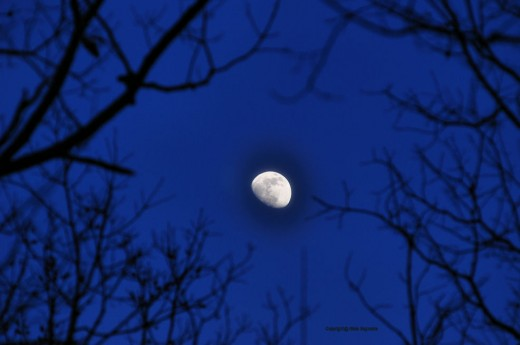 The half moon hung overhead, slightly to the east, after sunset.