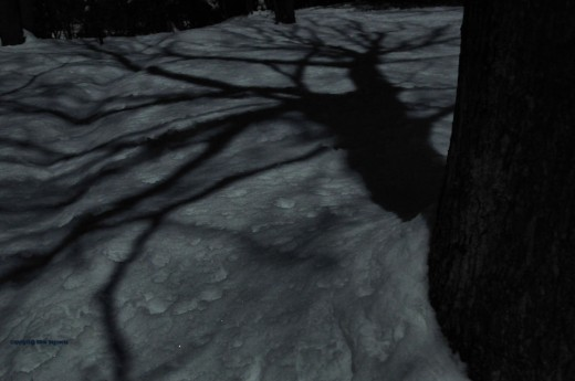 Its light was enough to cast moonshadows of trees in the yard.
