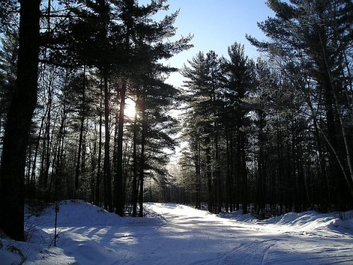 It was an incredibly beautiful morning - glistening diamonds were spilled all over the woods.