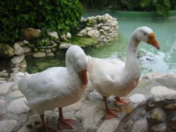 You revitalize your wit when you observe ducks for a day.