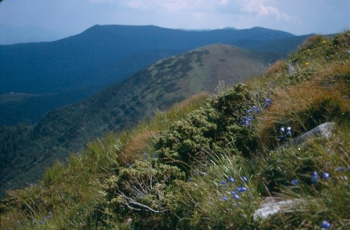 Looking south along the Chornahora from just below the summit of Hoverla.