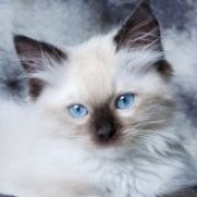 sweet kitten profile image