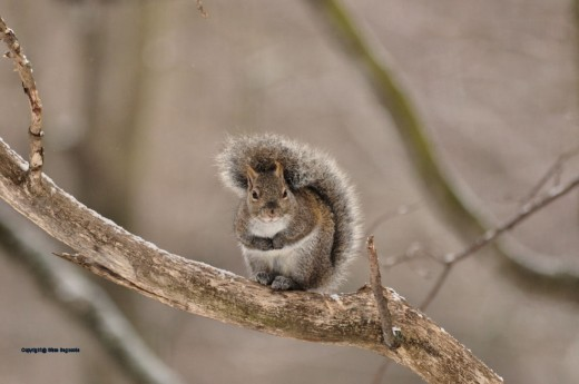 This squirrel looks chilly.