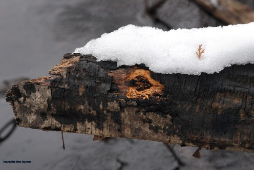 This log kind of looks like a critter face with the eye the gouged out area. The cedar twig is a nice touch.
