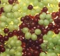 Grapes And Grapeseed Oil for Health