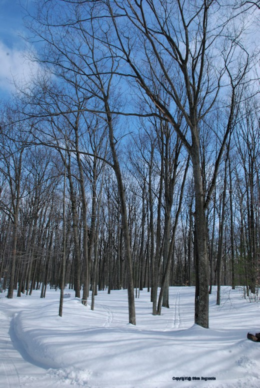 Knee-deep snow still covers the woods on March 1.