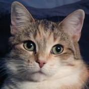 Jennisis profile image