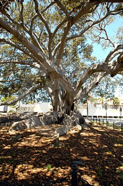 A Lesson From The Fig Tree And How I Approach Prayer