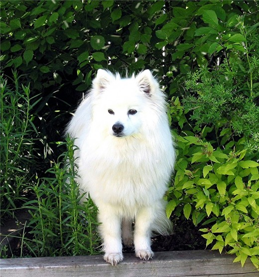 Be careful! Your dog may have urushiol oil on his fur!