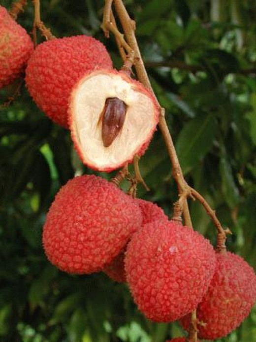 The lychee fruit is a super food!