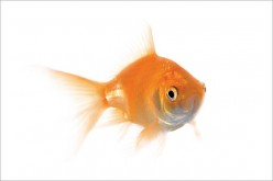 So, You Just Bought A Pet Fish, Now What? Tips For New Fish Owners