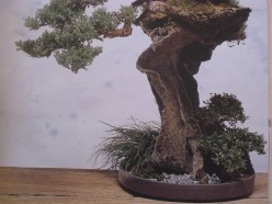 EASY WAY TO MAKE BONSAI AT HOME