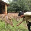 rishanjali profile image