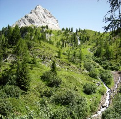 Flowers of Alps: a description of three species