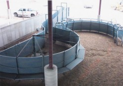 Handling Facilities: The Most Important Thing In a Beef Cattle Operation Part 2