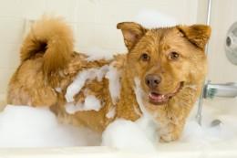 Taking a bath is fun! Woof!