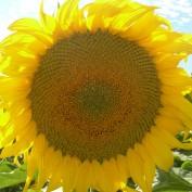 sunny300 profile image