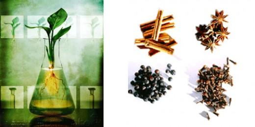 www.herbalber.com/med.gif