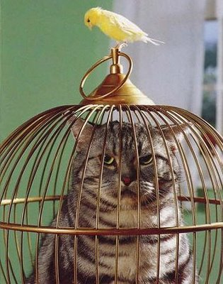 Stupid Cat tried to catch the birdy, now he's stuck in a cage while the birdy goes to the pub.