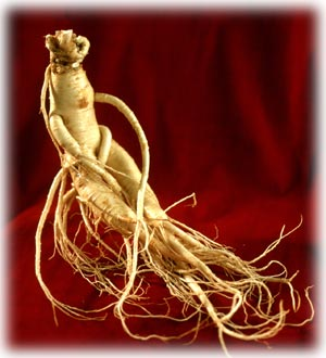 Yellow ginseng root