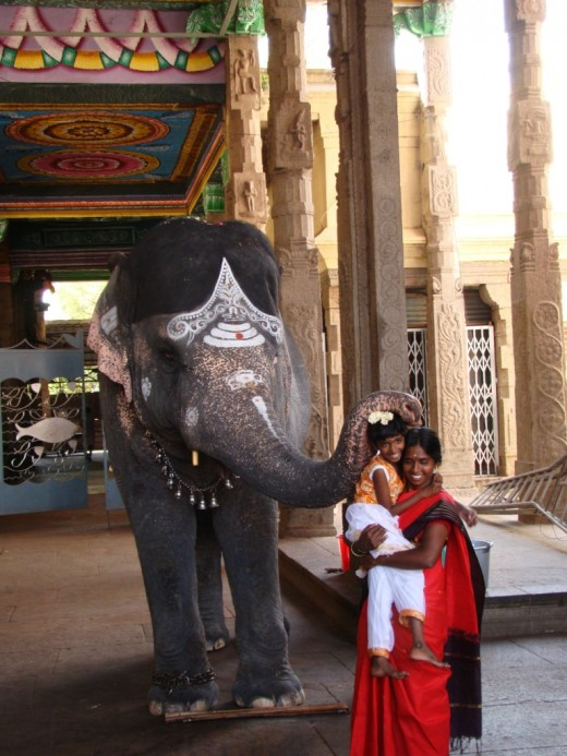 The temple elephant blessing devotees