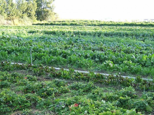 organic small farm
