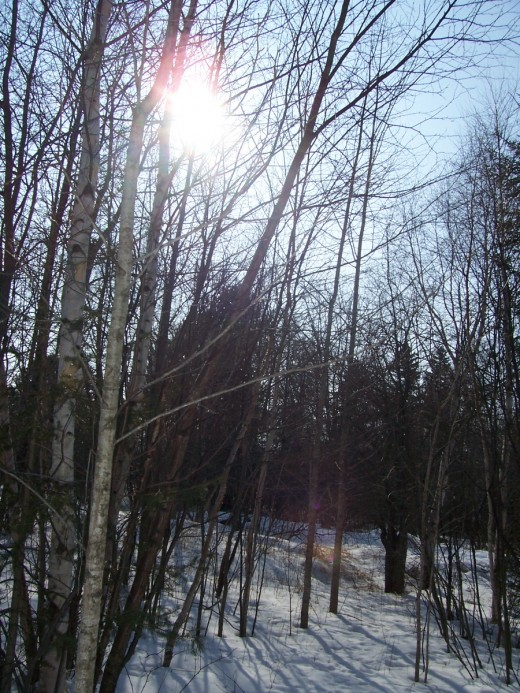 A winter sky filed with sun shining through the naked trees.