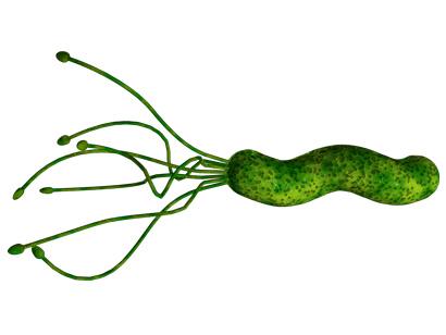 H. Pylori Bacteria