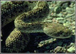 Names Of Poisonous Snakes
