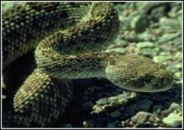 names of poisonous snakes hubpages