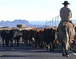 Rider with cattle on road. GNU free documentation