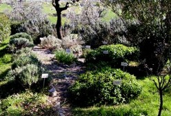 How to create a garden of aromatic plants