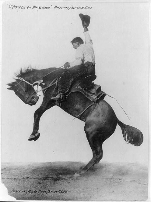 A picture from an Cheyenne Frontier Days Rodeo (CFD celebrated their 100th year in 1996!)