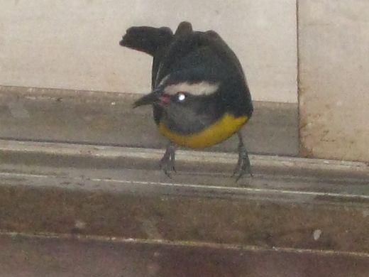 Short visit from a little birdie