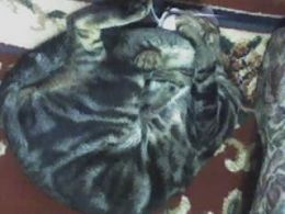 The posing cat 1