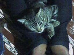 The posing cat 3
