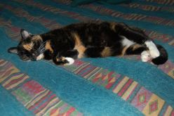 """PK aka """"Putty Kat"""" was the first to adopt us. She is 17 years old!"""