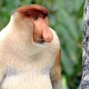 wacknuts profile image